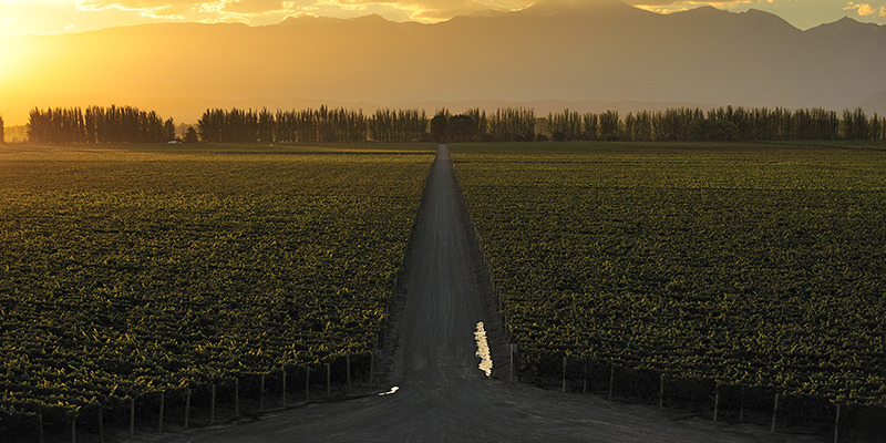 Chiliean Vineyard. Latin America's success in the wine industry is attributed by one insider to careful consideration of the region's future trading prospects over 20 years ago.